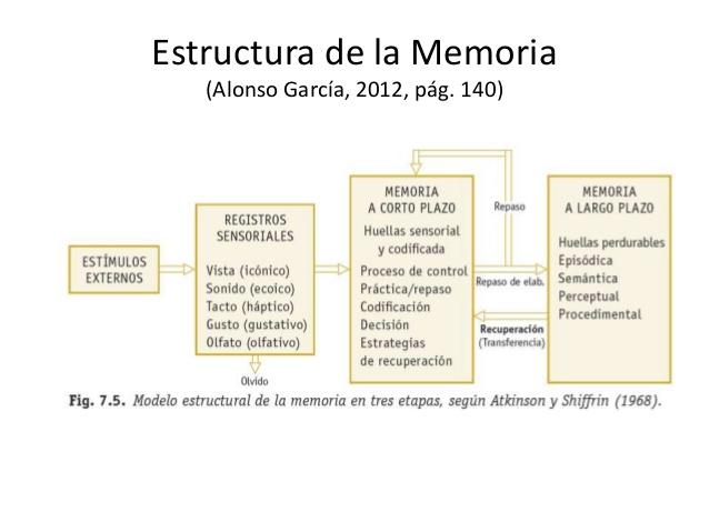 la-memoria-humana-1jpg