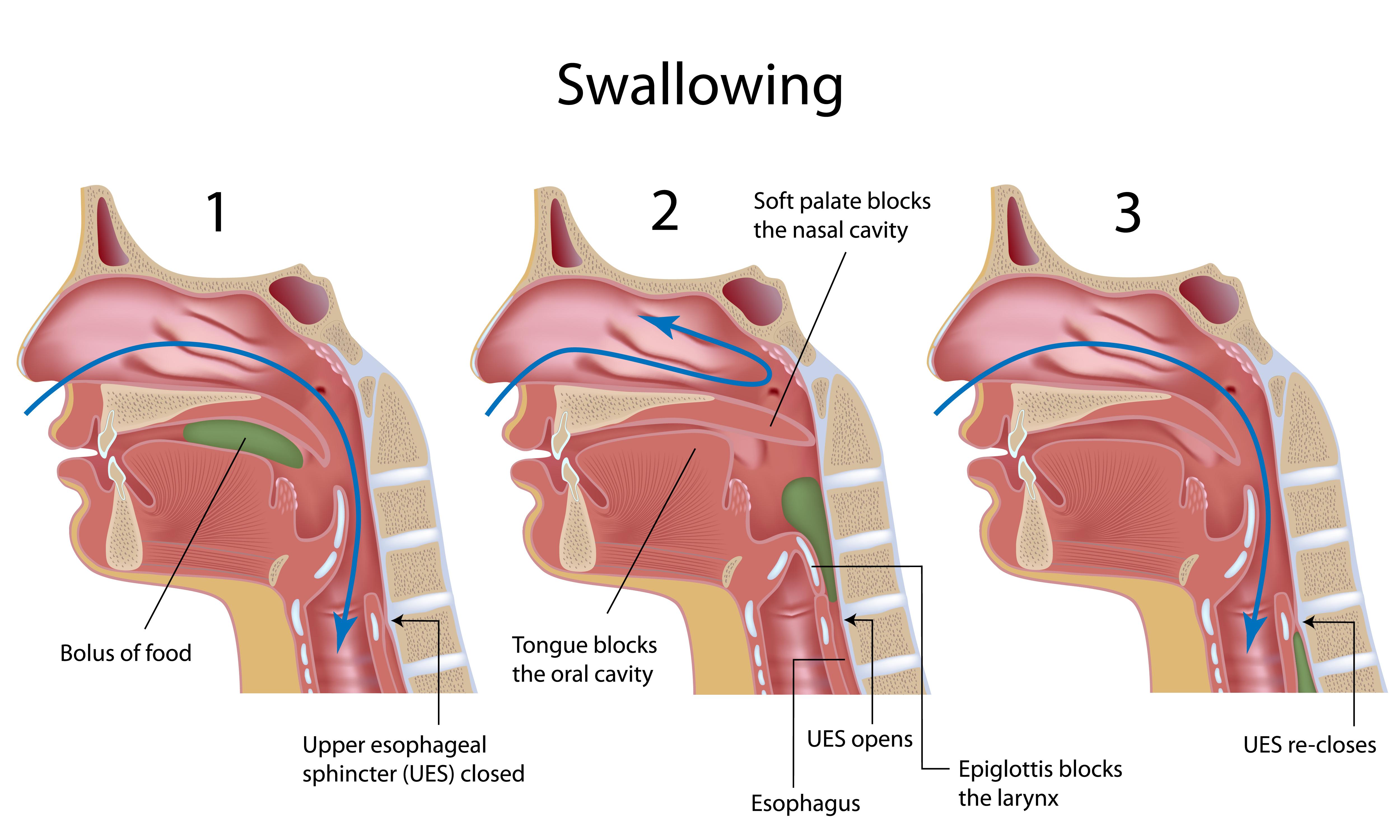 Otorrinolaringologo, Experto en Laringe, Faringe, Disfagia, voz y ...
