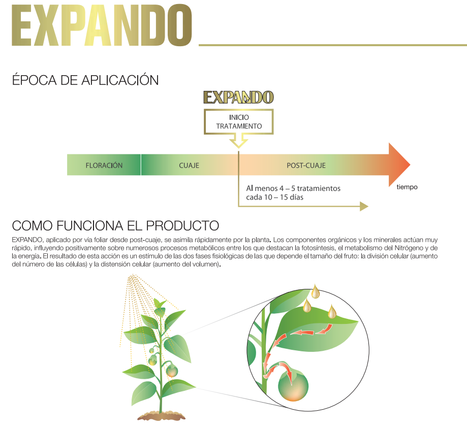 EXPANDOpng