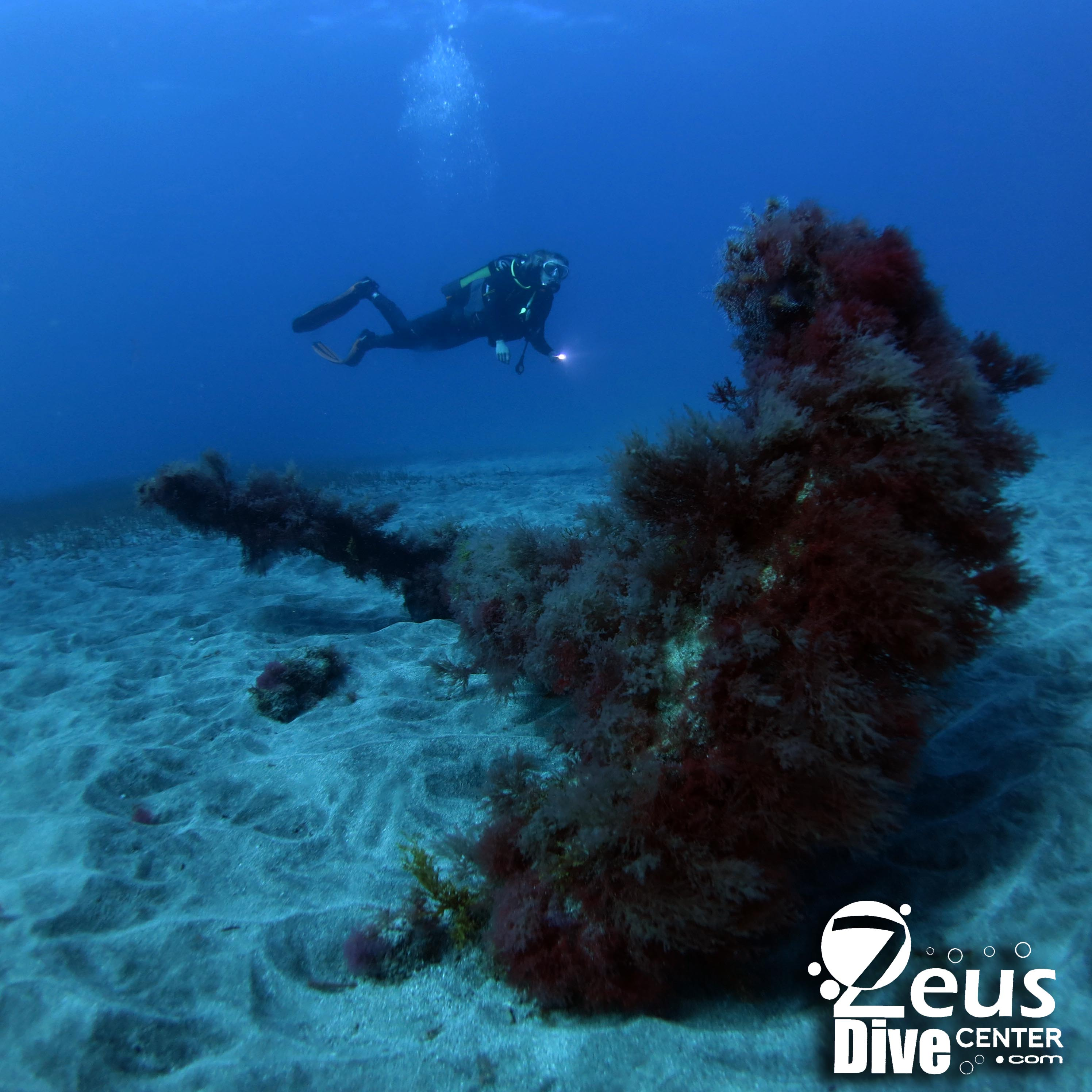 Scuba Dive in Gran Canaria with Zeus Dive Center