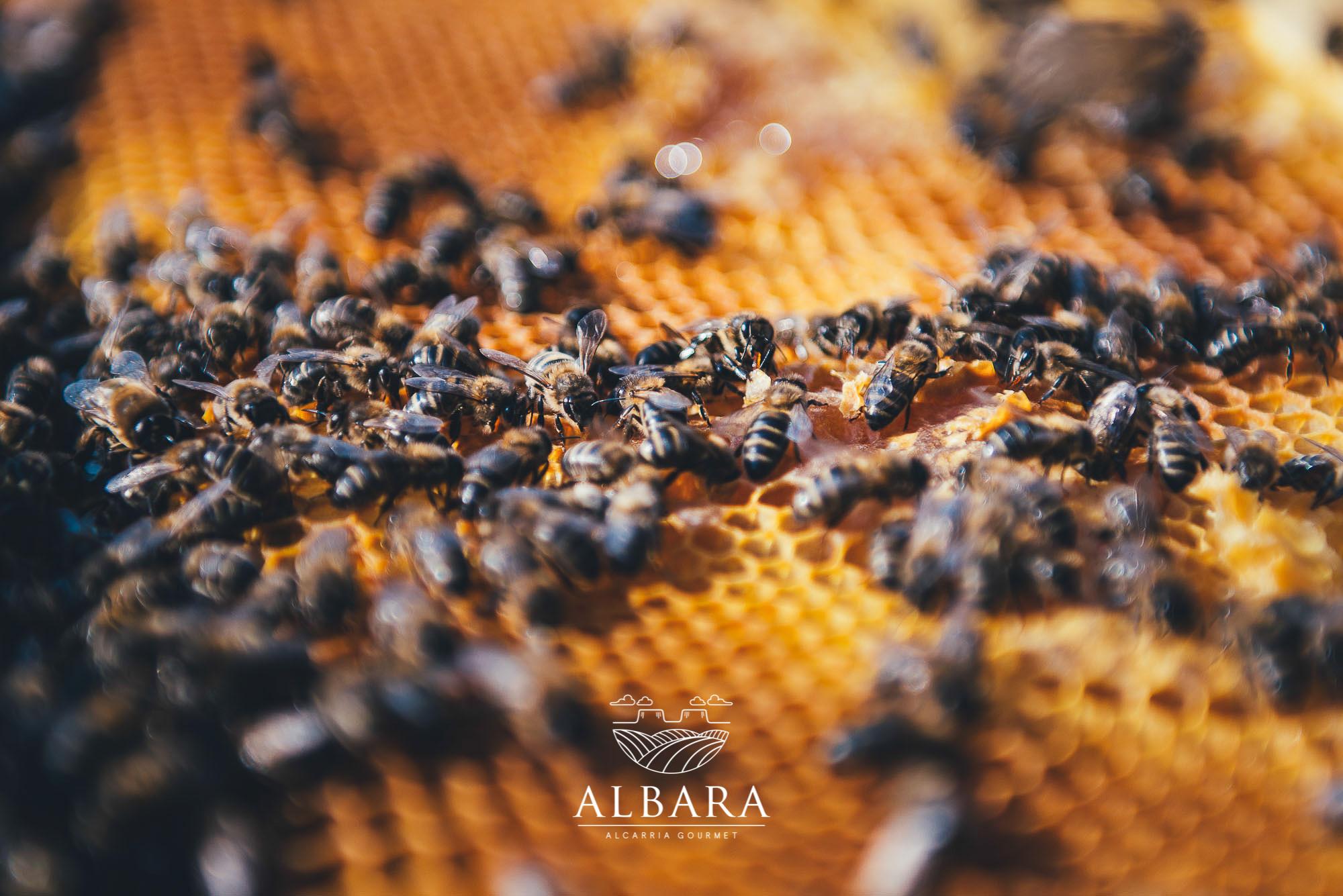albara_11jpg