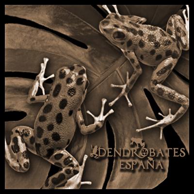 dendrobates-spain-perfil_1.png