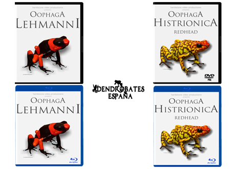 oophaga-histrionica.png