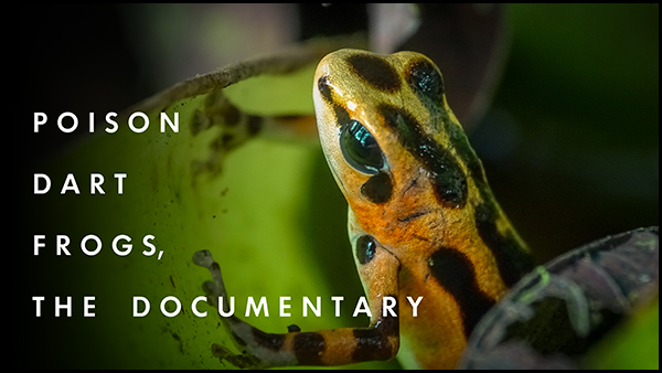 poison-dart-frog-the-documentary-1.jpg