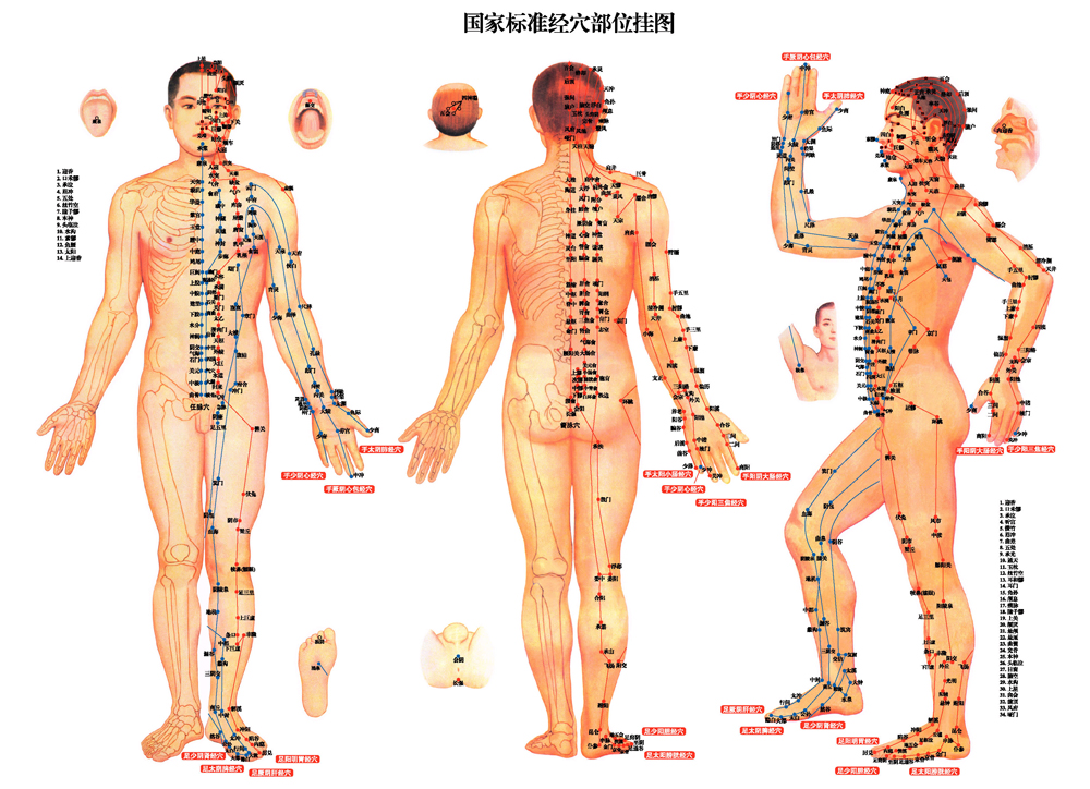acupuncture-for-internal-diseasesjpg