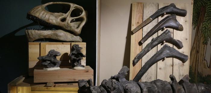 imagenes_Reproduccion_del_craneo_de_Turiasaurus_de_Riodeva_rodeado_de_fosiles_originales_de_Angeac_en_la_exposicion_del_Museum_de_La_Rochelle_48f44730jpg